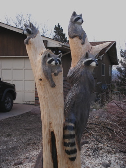 [More Raccoons]
